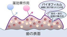 タンパク質分解